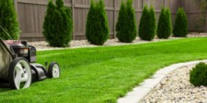 lawn care - lawn services